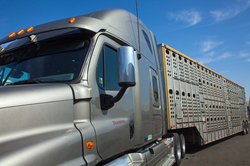 Livestock & Insect Carriers Exempted from the ELD Mandate